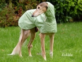 dog-raincoat Hood lined